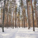 Talvitunnelmaa Aulangon metsäluonnossa.