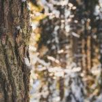 Upea talvinen Aulanko.