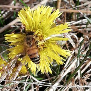 Päivä mehiläisenä